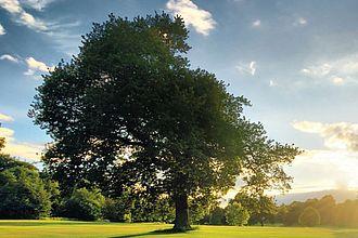 Baum auf Lichtung